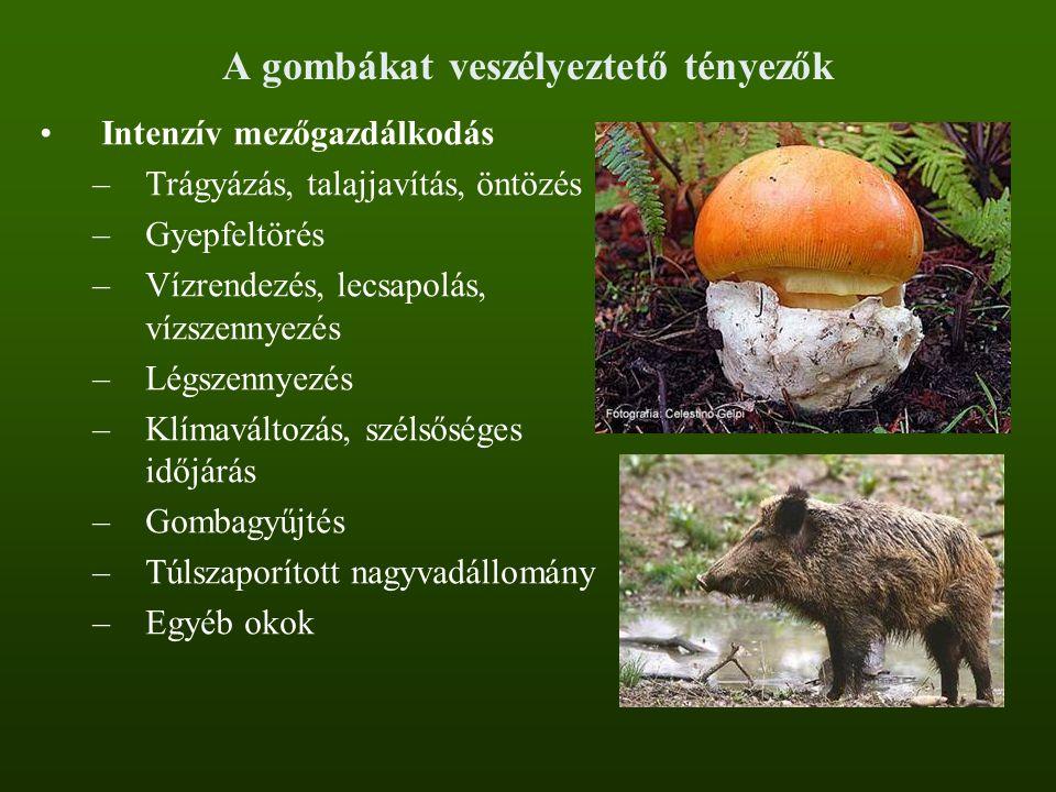 A gombákat veszélyeztető tényezők Intenzív mezőgazdálkodás –Trágyázás, talajjavítás, öntözés –Gyepfeltörés –Vízrendezés, lecsapolás, vízszennyezés –Lé