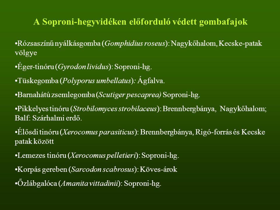 A Soproni-hegyvidéken előforduló védett gombafajok Rózsaszínű nyálkásgomba (Gomphidius roseus): Nagykőhalom, Kecske-patak völgye Éger-tinóru (Gyrodon