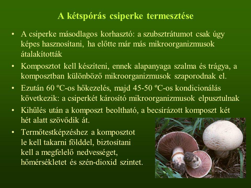 A kétspórás csiperke termesztése A csiperke másodlagos korhasztó: a szubsztrátumot csak úgy képes hasznosítani, ha előtte már más mikroorganizmusok át