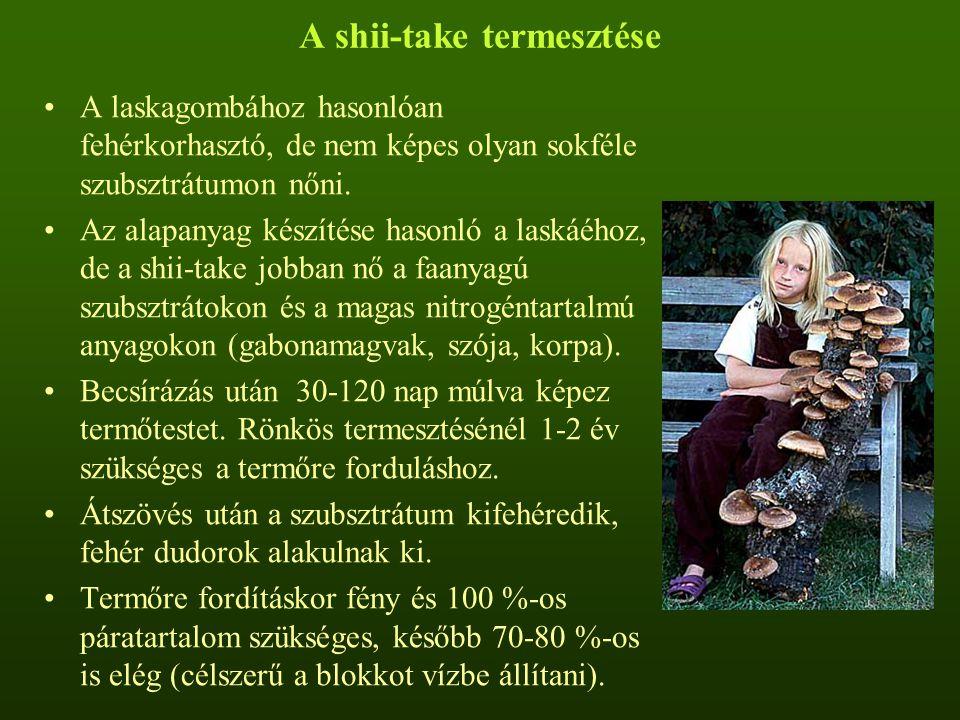 A shii-take termesztése A laskagombához hasonlóan fehérkorhasztó, de nem képes olyan sokféle szubsztrátumon nőni. Az alapanyag készítése hasonló a las