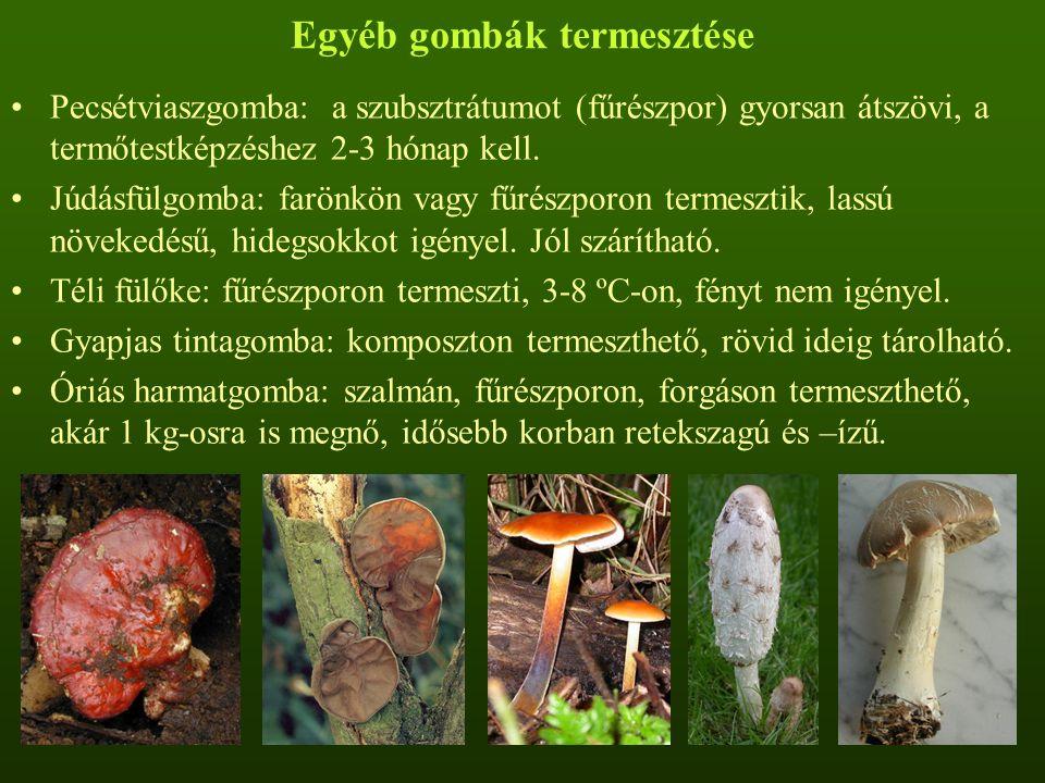 Egyéb gombák termesztése Pecsétviaszgomba: a szubsztrátumot (fűrészpor) gyorsan átszövi, a termőtestképzéshez 2-3 hónap kell. Júdásfülgomba: farönkön
