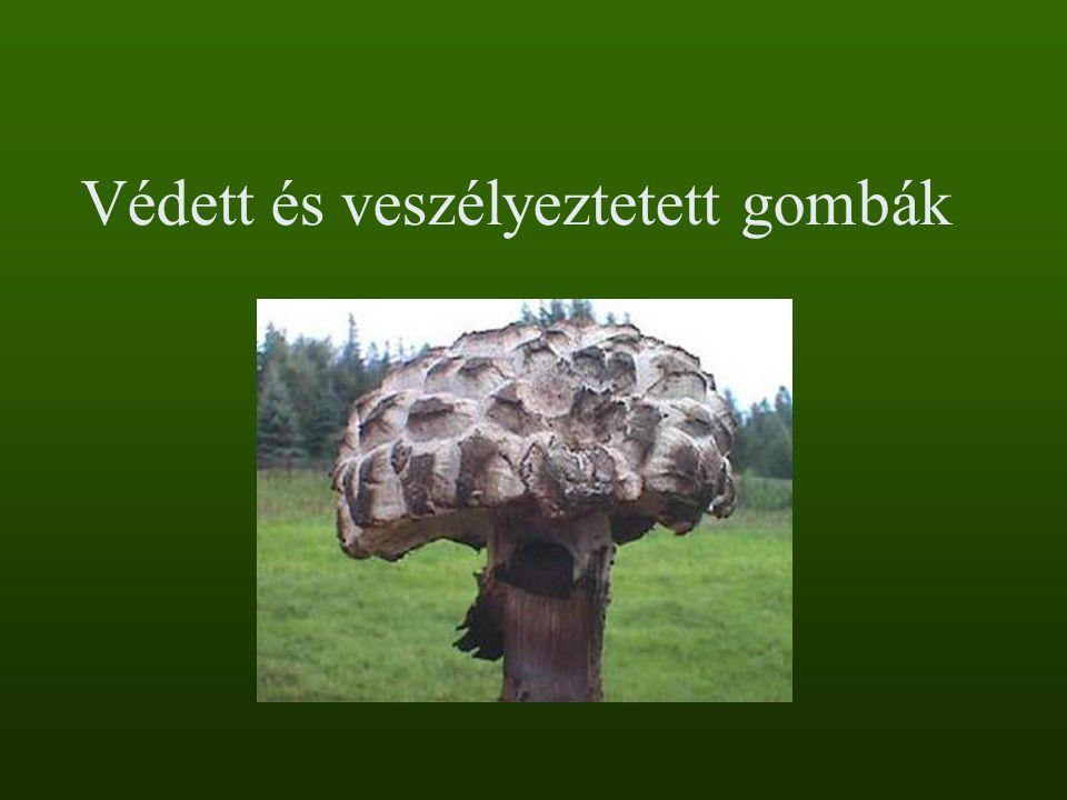 Védett és veszélyeztetett gombák