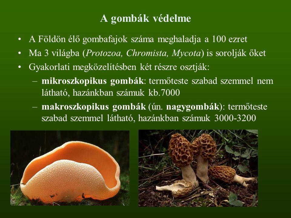 A gombák védelme A Földön élő gombafajok száma meghaladja a 100 ezret Ma 3 világba (Protozoa, Chromista, Mycota) is sorolják őket Gyakorlati megközelí