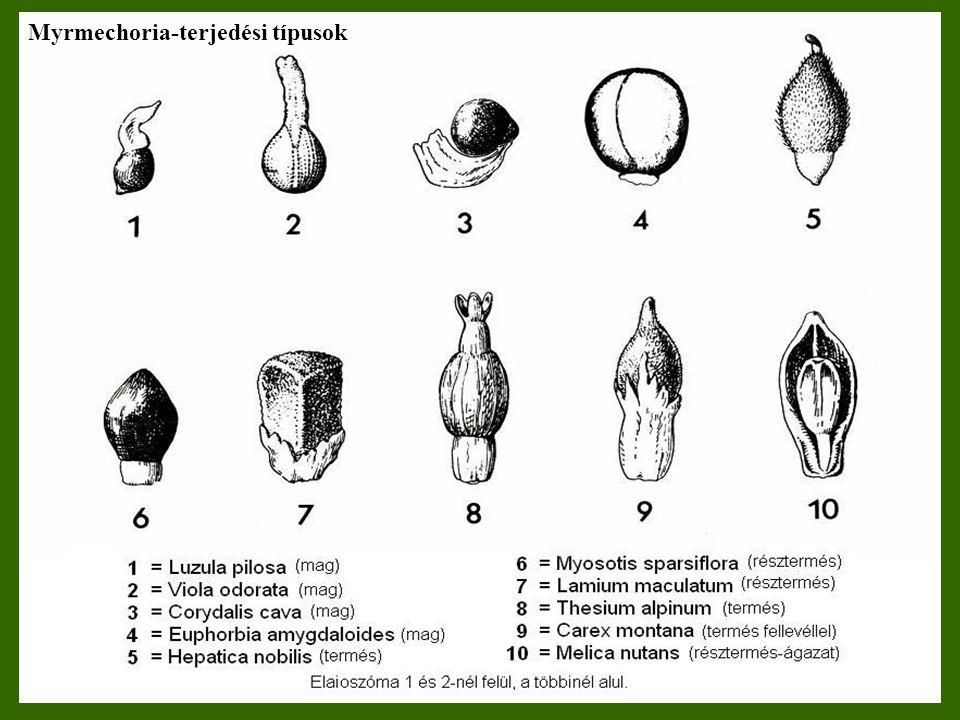 Myrmechoria-terjedési típusok