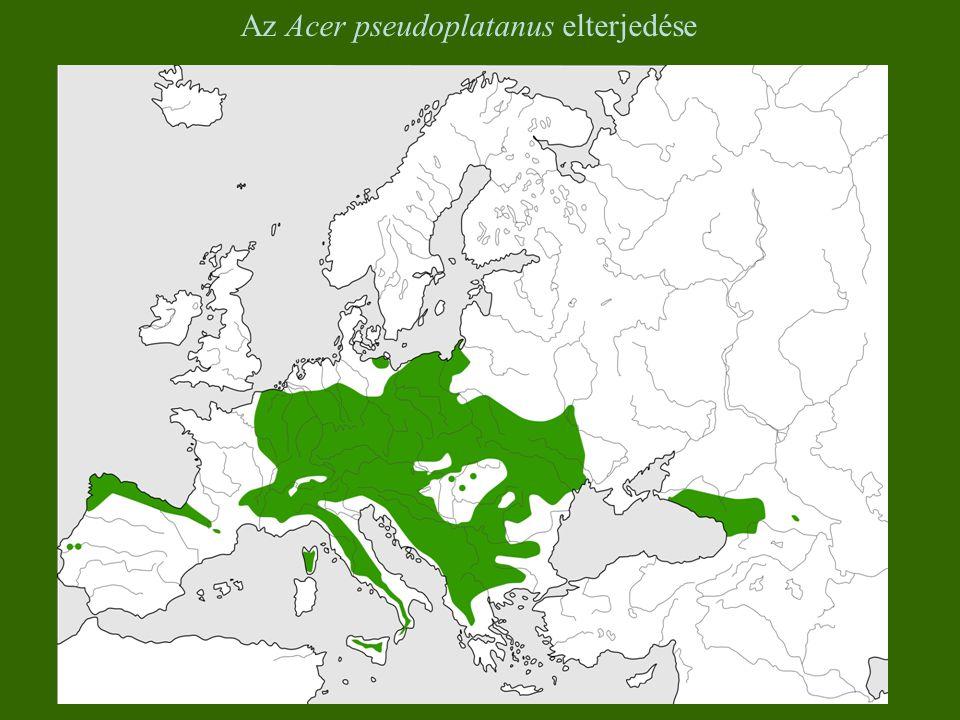 Az Acer pseudoplatanus elterjedése