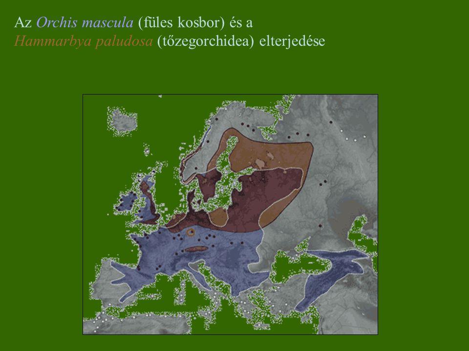 Az Orchis mascula (füles kosbor) és a Hammarbya paludosa (tőzegorchidea) elterjedése