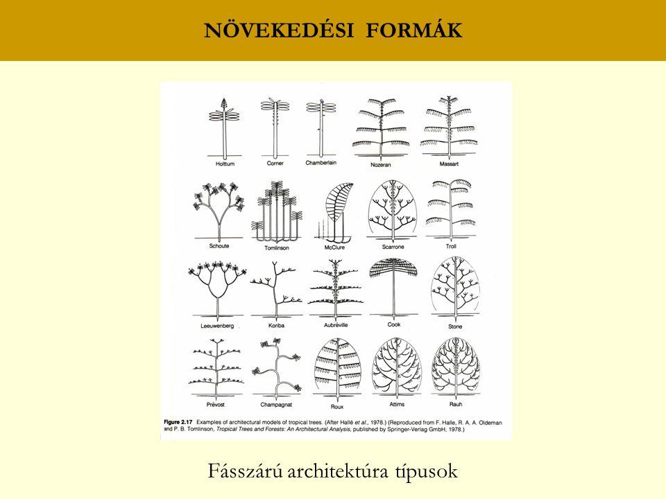 NÖVEKEDÉSI FORMÁK Fásszárú architektúra típusok