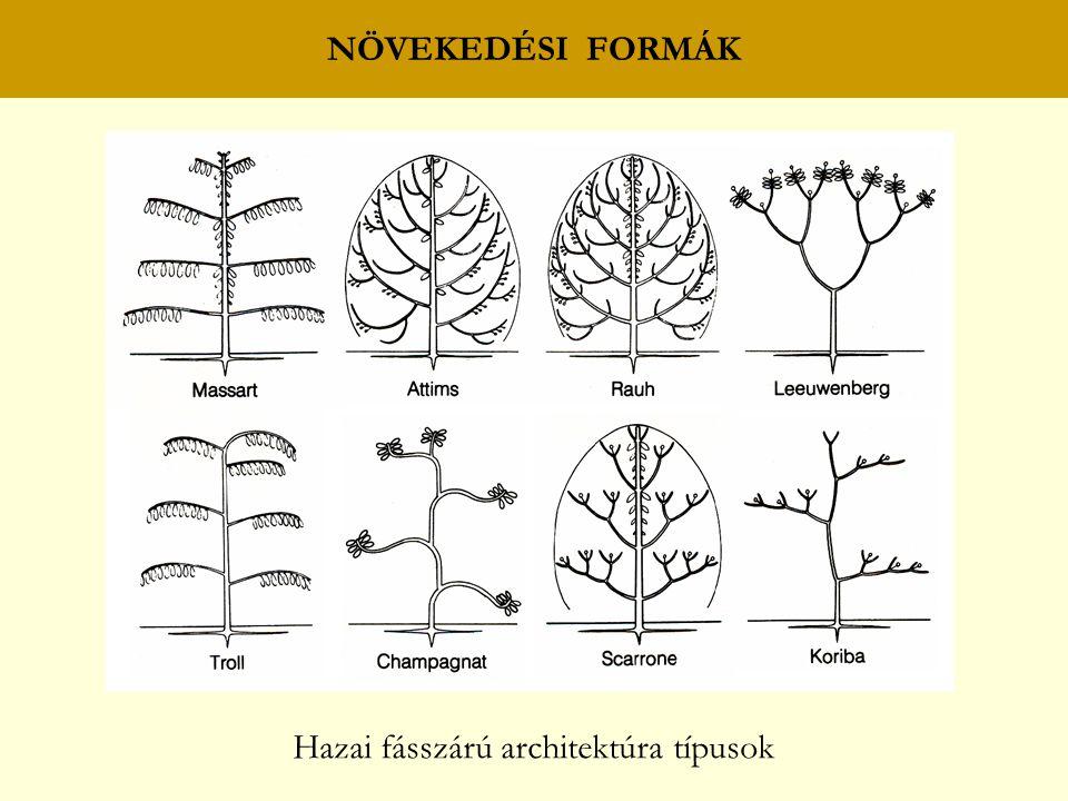 NÖVEKEDÉSI FORMÁK Hazai fásszárú architektúra típusok