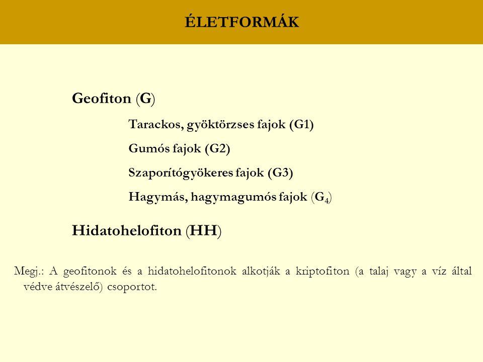ÉLETFORMÁK Geofiton (G) Tarackos, gyöktörzses fajok (G1) Gumós fajok (G2) Szaporítógyökeres fajok (G3) Hagymás, hagymagumós fajok (G 4 ) Hidatohelofiton (HH) Megj.: A geofitonok és a hidatohelofitonok alkotják a kriptofiton (a talaj vagy a víz által védve átvészelő) csoportot.
