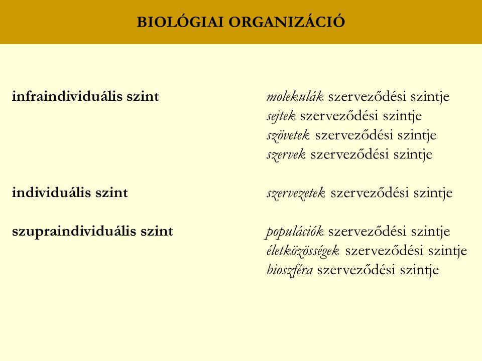 BIOLÓGIAI ORGANIZÁCIÓ infraindividuális szintmolekulák szerveződési szintje sejtek szerveződési szintje szövetek szerveződési szintje szervek szerveződési szintje individuális szintszervezetek szerveződési szintje szupraindividuális szintpopulációk szerveződési szintje életközösségek szerveződési szintje bioszféra szerveződési szintje