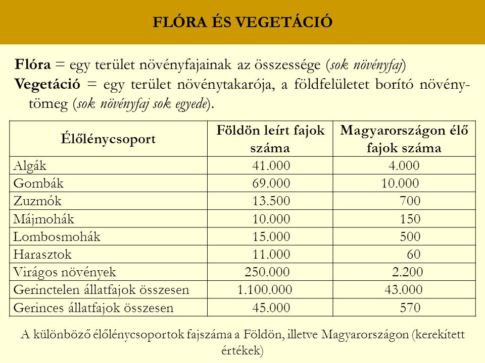 FLÓRA ÉS VEGETÁCIÓ Flóra = egy terület növényfajainak az összessége (sok növényfaj) Vegetáció = egy terület növénytakarója, a földfelületet borító növény- tömeg (sok növényfaj sok egyede).