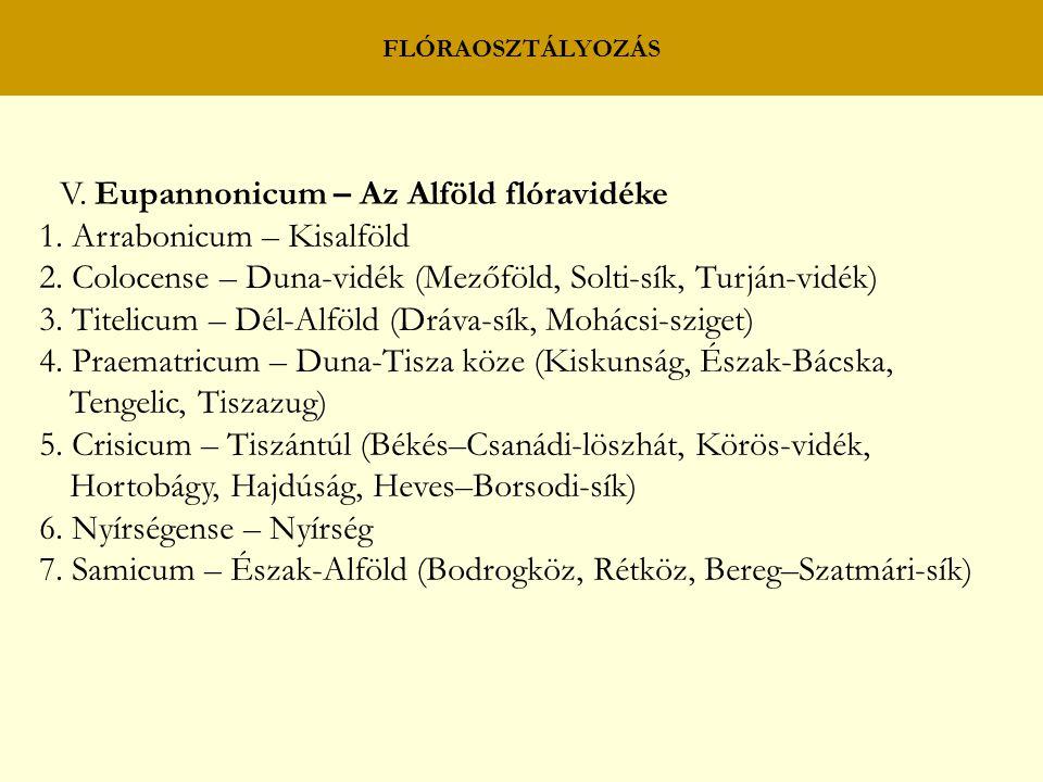 FLÓRAOSZTÁLYOZÁS V. Eupannonicum – Az Alföld flóravidéke 1. Arrabonicum – Kisalföld 2. Colocense – Duna-vidék (Mezőföld, Solti-sík, Turján-vidék) 3. T