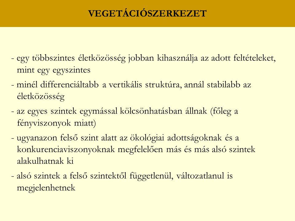 VEGETÁCIÓSZERKEZET - egy többszintes életközösség jobban kihasználja az adott feltételeket, mint egy egyszintes - minél differenciáltabb a vertikális