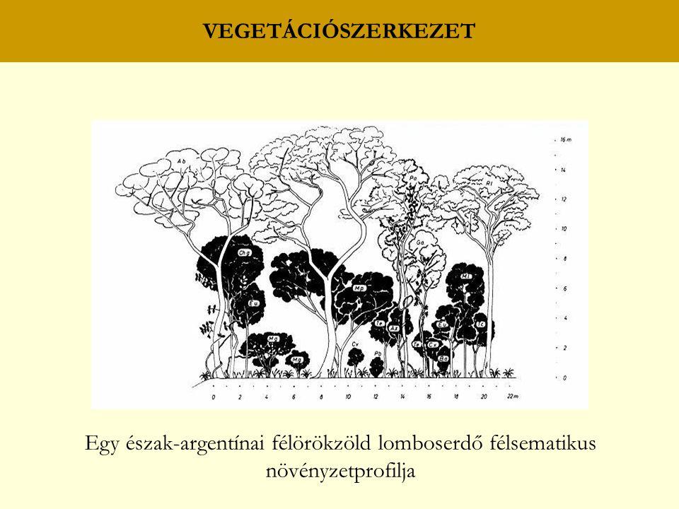 VEGETÁCIÓSZERKEZET Egy észak-argentínai félörökzöld lomboserdő félsematikus növényzetprofilja