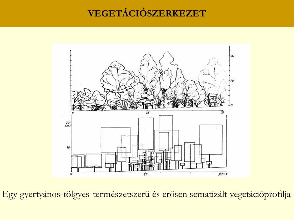 VEGETÁCIÓSZERKEZET Egy gyertyános-tölgyes természetszerű és erősen sematizált vegetációprofilja
