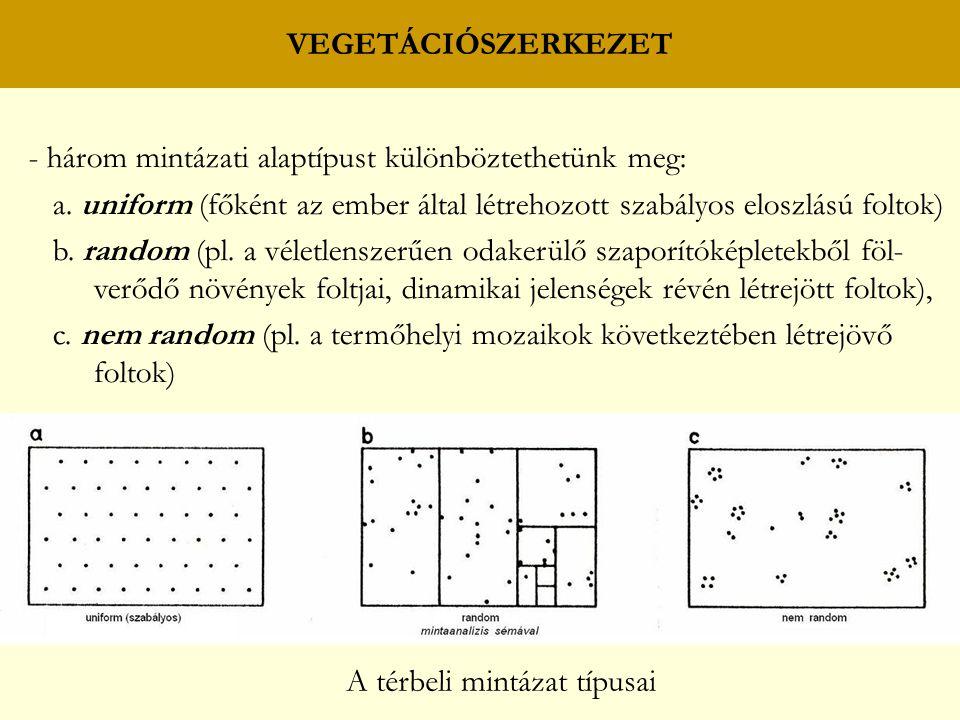 VEGETÁCIÓSZERKEZET - három mintázati alaptípust különböztethetünk meg: a. uniform (főként az ember által létrehozott szabályos eloszlású foltok) b. ra