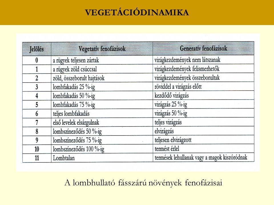 VEGETÁCIÓDINAMIKA A lombhullató fásszárú növények fenofázisai