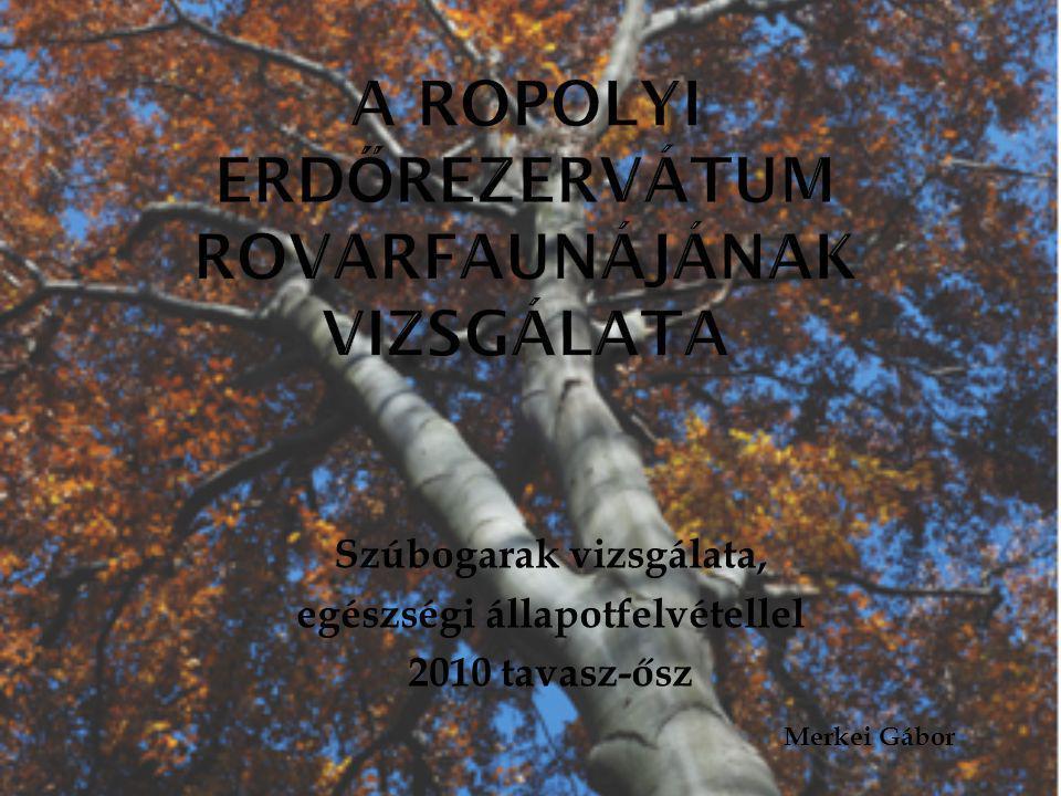 Szúbogarak vizsgálata, egészségi állapotfelvétellel 2010 tavasz-ősz Merkei Gábor