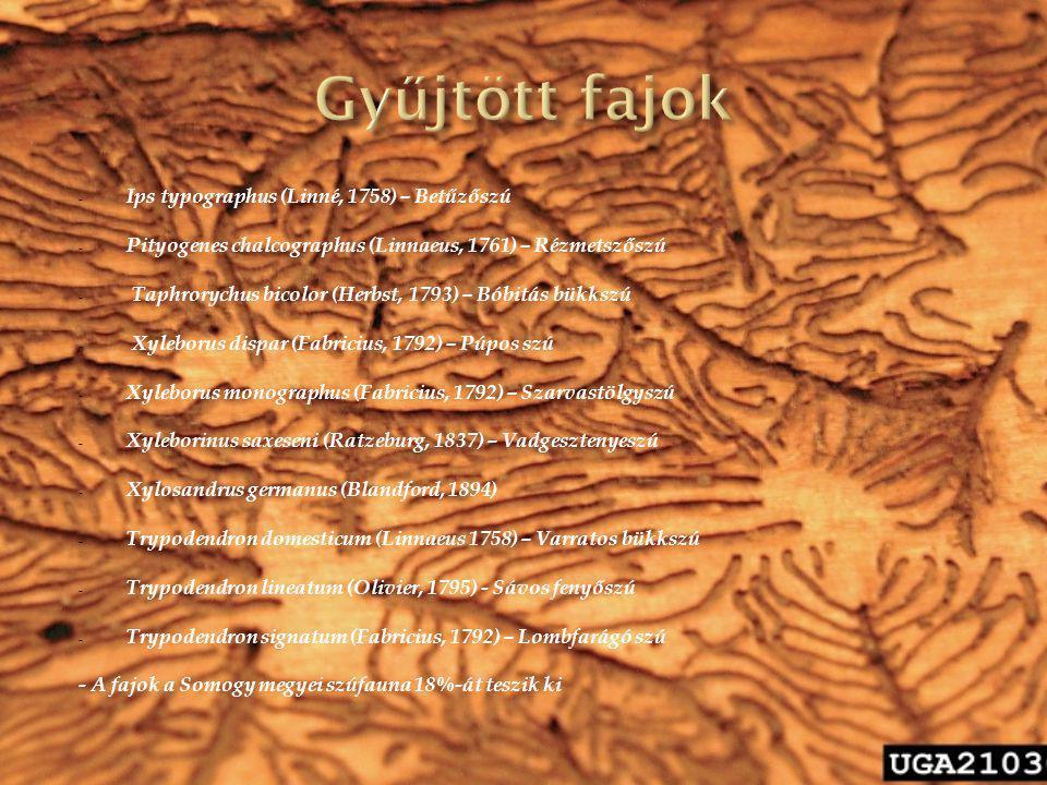 - Ips typographus (Linné, 1758) – Betűzőszú - Pityogenes chalcographus (Linnaeus, 1761) – Rézmetszőszú - Taphrorychus bicolor (Herbst, 1793) – Bóbitás