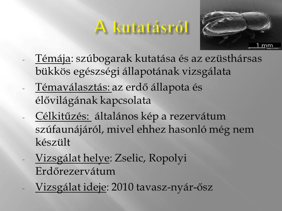 - Témája: szúbogarak kutatása és az ezüsthársas bükkös egészségi állapotának vizsgálata - Témaválasztás: az erdő állapota és élővilágának kapcsolata -
