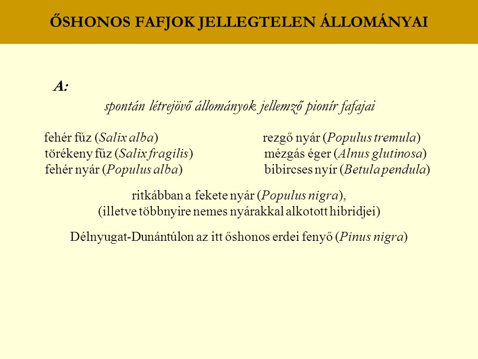 ŐSHONOS FAFJOK JELLEGTELEN ÁLLOMÁNYAI A: spontán létrejövő állományok jellemző pionír fafajai fehér fűz (Salix alba) rezgő nyár (Populus tremula) törékeny fűz (Salix fragilis) mézgás éger (Alnus glutinosa) fehér nyár (Populus alba) bibircses nyír (Betula pendula) ritkábban a fekete nyár (Populus nigra), (illetve többnyire nemes nyárakkal alkotott hibridjei) Délnyugat-Dunántúlon az itt őshonos erdei fenyő (Pinus nigra)