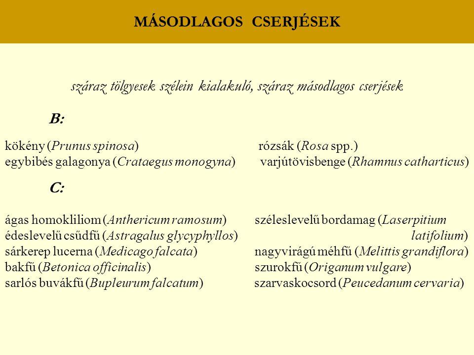 MÁSODLAGOS CSERJÉSEK száraz tölgyesek szélein kialakuló, száraz másodlagos cserjések B: kökény (Prunus spinosa) rózsák (Rosa spp.) egybibés galagonya (Crataegus monogyna) varjútövisbenge (Rhamnus catharticus) C: ágas homokliliom (Anthericum ramosum) széleslevelű bordamag (Laserpitium édeslevelű csűdfű (Astragalus glycyphyllos) latifolium) sárkerep lucerna (Medicago falcata) nagyvirágú méhfű (Melittis grandiflora) bakfű (Betonica officinalis) szurokfű (Origanum vulgare) sarlós buvákfű (Bupleurum falcatum) szarvaskocsord (Peucedanum cervaria)