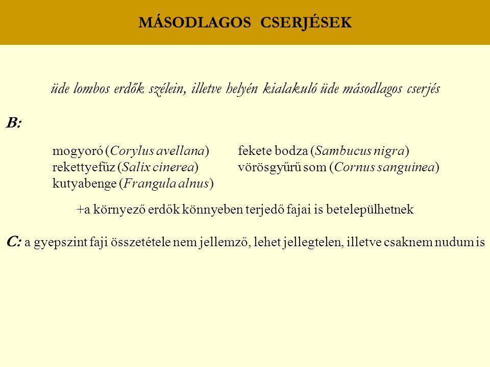 MÁSODLAGOS CSERJÉSEK üde lombos erdők szélein, illetve helyén kialakuló üde másodlagos cserjés B: mogyoró (Corylus avellana) fekete bodza (Sambucus nigra) rekettyefűz (Salix cinerea) vörösgyűrű som (Cornus sanguinea) kutyabenge (Frangula alnus) +a környező erdők könnyeben terjedő fajai is betelepülhetnek C: a gyepszint faji összetétele nem jellemző, lehet jellegtelen, illetve csaknem nudum is