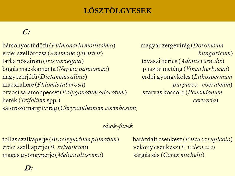 LÖSZTÖLGYESEK C: bársonyos tüdőfű (Pulmonaria mollissima) magyar zergevirág (Doronicum erdei szellőrózsa (Anemone sylvestris) hungaricum) tarka nőszirom (Iris variegata) tavaszi hérics (Adonis vernalis) bugás macskamenta (Nepeta pannonica) pusztai meténg (Vinca herbacea) nagyezerjófű (Dictamnus albus) erdei gyöngyköles (Lithospermum macskahere (Phlomis tuberosa) purpureo –coeruleum) orvosi salamonpecsét (Polygonatum odoratum) szarvas kocsord (Peucedanum herék (Trifolium spp.) cervaria) sátorozó margitvirág (Chrysanthemum cormbosum ) sások-füvek tollas szálkaperje (Brachypodium pinnatum) barázdált csenkesz (Festuca rupicola) erdei szálkaperje (B.