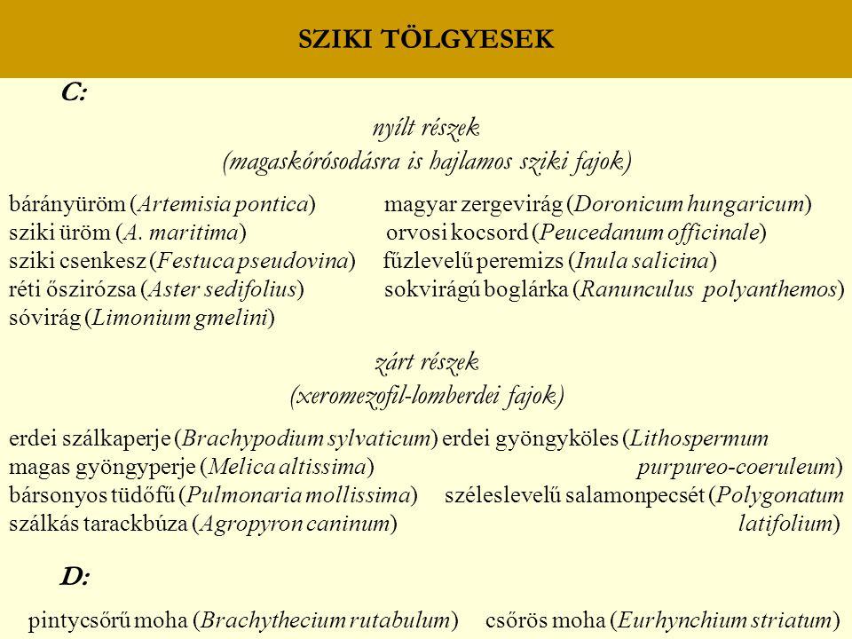 SZIKI TÖLGYESEK C: nyílt részek (magaskórósodásra is hajlamos sziki fajok) bárányüröm (Artemisia pontica) magyar zergevirág (Doronicum hungaricum) szi