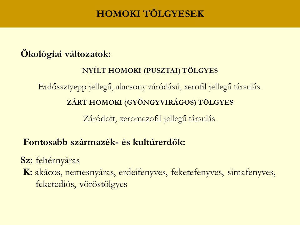 HOMOKI TÖLGYESEK Ökológiai változatok: NYÍLT HOMOKI (PUSZTAI) TÖLGYES Erdőssztyepp jellegű, alacsony záródású, xerofil jellegű társulás. ZÁRT HOMOKI (