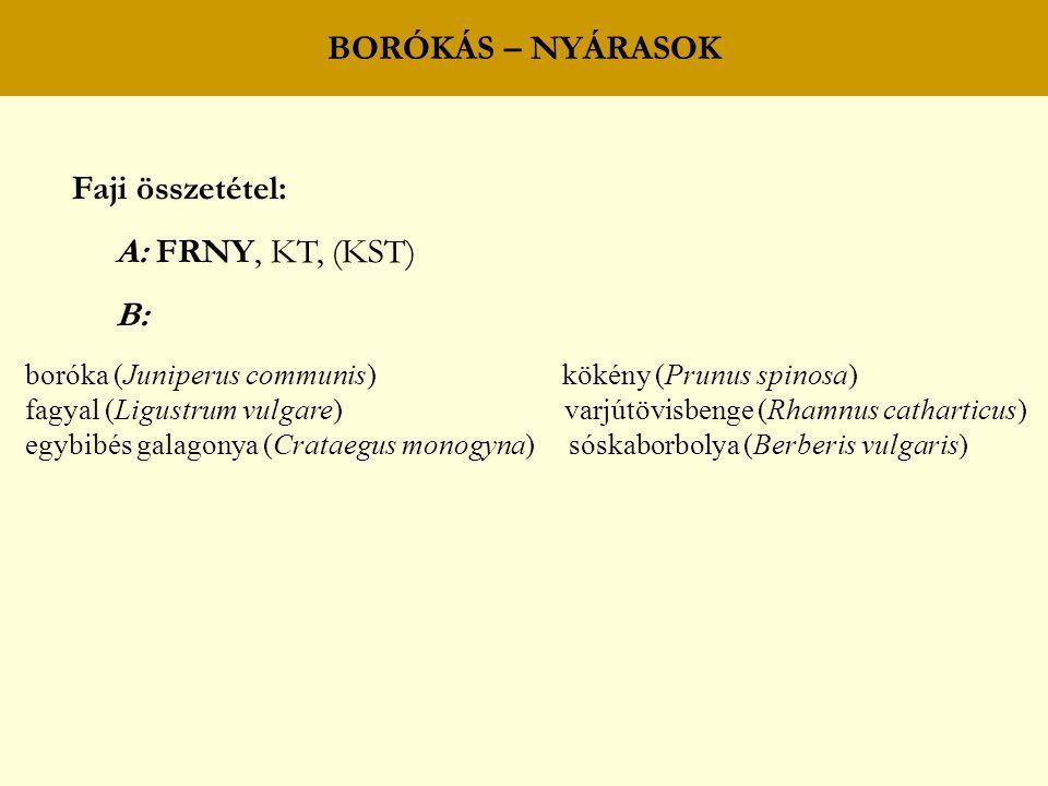 BORÓKÁS – NYÁRASOK Faji összetétel: A: FRNY, KT, (KST) B: boróka (Juniperus communis) kökény (Prunus spinosa) fagyal (Ligustrum vulgare) varjútövisbenge (Rhamnus catharticus) egybibés galagonya (Crataegus monogyna) sóskaborbolya (Berberis vulgaris)