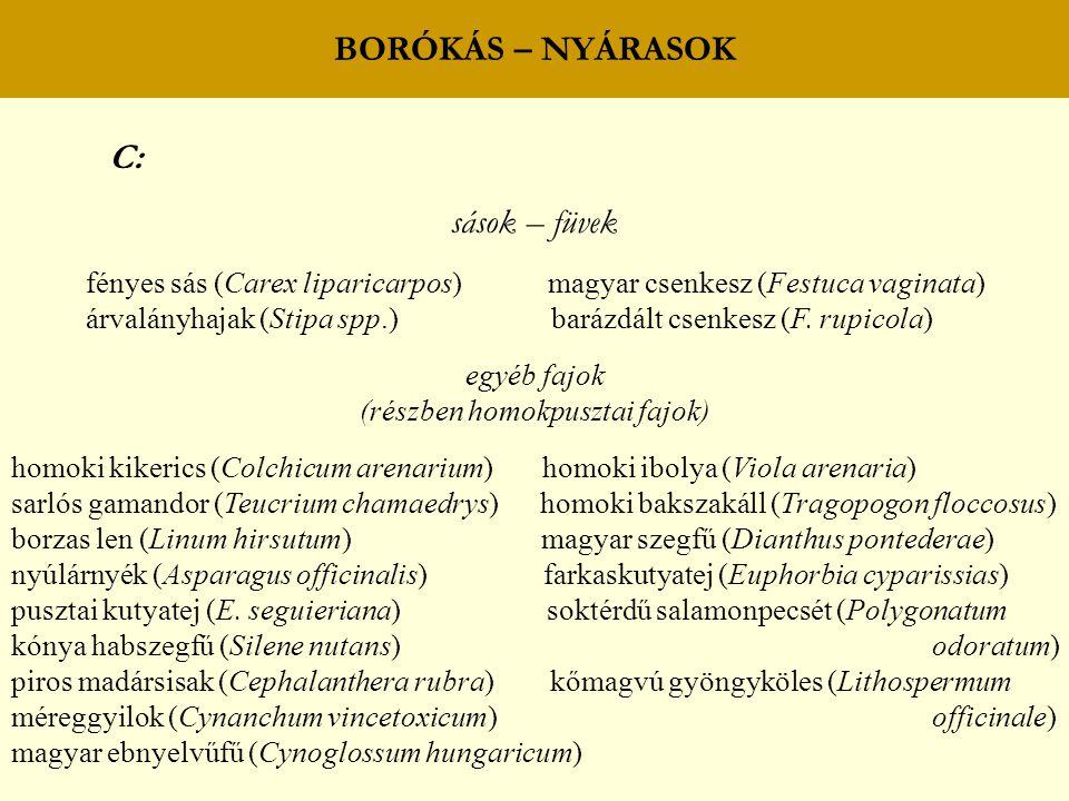 BORÓKÁS – NYÁRASOK C: sások – füvek fényes sás (Carex liparicarpos) magyar csenkesz (Festuca vaginata) árvalányhajak (Stipa spp.) barázdált csenkesz (F.