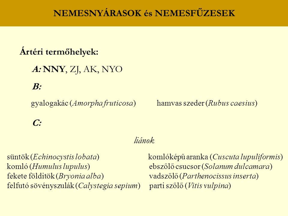 NEMESNYÁRASOK és NEMESFŰZESEK Ártéri termőhelyek: A: NNY, ZJ, AK, NYO B: gyalogakác (Amorpha fruticosa) hamvas szeder (Rubus caesius) C: liánok süntök (Echinocystis lobata) komlóképű aranka (Cuscuta lupuliformis) komló (Humulus lupulus) ebszőlő csucsor (Solanum dulcamara) fekete földitök (Bryonia alba) vadszőlő (Parthenocissus inserta) felfutó sövényszulák (Calystegia sepium) parti szőlő (Vitis vulpina)