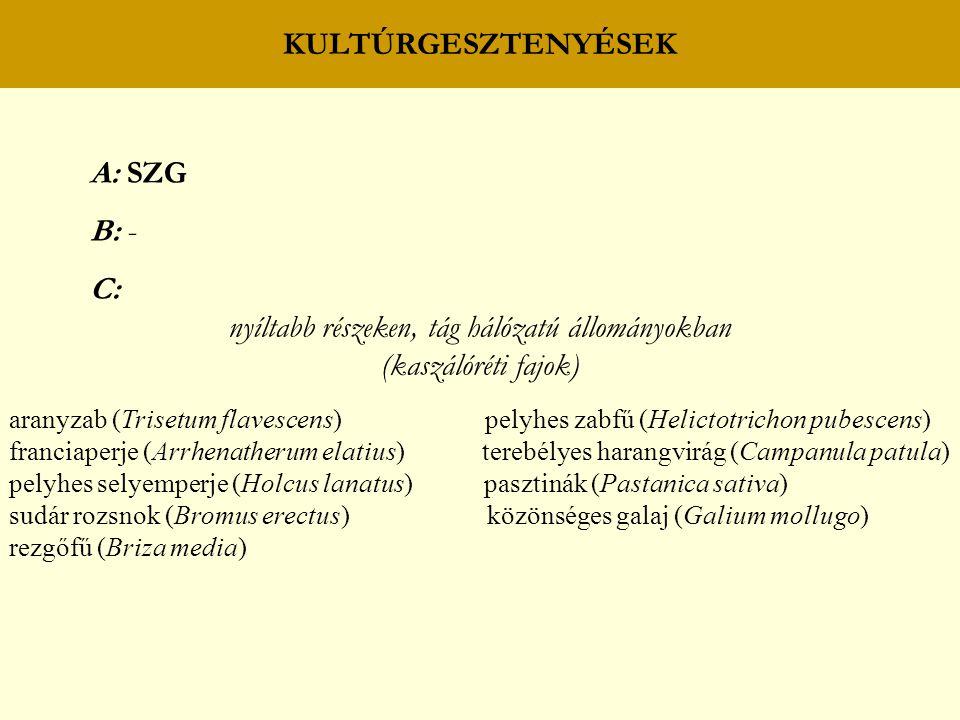 KULTÚRGESZTENYÉSEK A: SZG B: - C: nyíltabb részeken, tág hálózatú állományokban (kaszálóréti fajok) aranyzab (Trisetum flavescens) pelyhes zabfű (Helictotrichon pubescens) franciaperje (Arrhenatherum elatius) terebélyes harangvirág (Campanula patula) pelyhes selyemperje (Holcus lanatus) pasztinák (Pastanica sativa) sudár rozsnok (Bromus erectus) közönséges galaj (Galium mollugo) rezgőfű (Briza media)