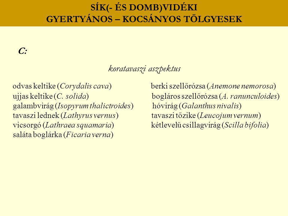 SÍK(- ÉS DOMB)VIDÉKI GYERTYÁNOS – KOCSÁNYOS TÖLGYESEK C: koratavaszi aszpektus odvas keltike (Corydalis cava) berki szellőrózsa (Anemone nemorosa) ujj