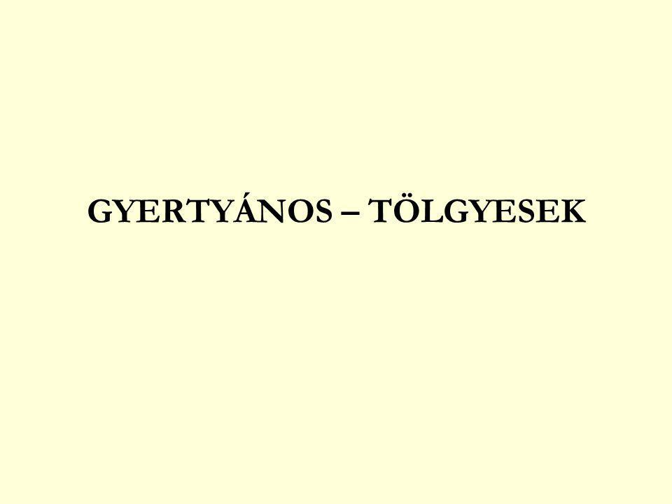 GYERTYÁNOS – TÖLGYESEK