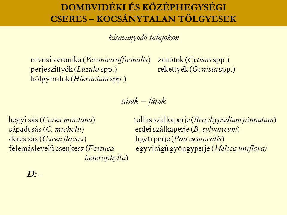 DOMBVIDÉKI ÉS KÖZÉPHEGYSÉGI CSERES – KOCSÁNYTALAN TÖLGYESEK kisavanyodó talajokon orvosi veronika (Veronica officinalis) zanótok (Cytisus spp.) perjes