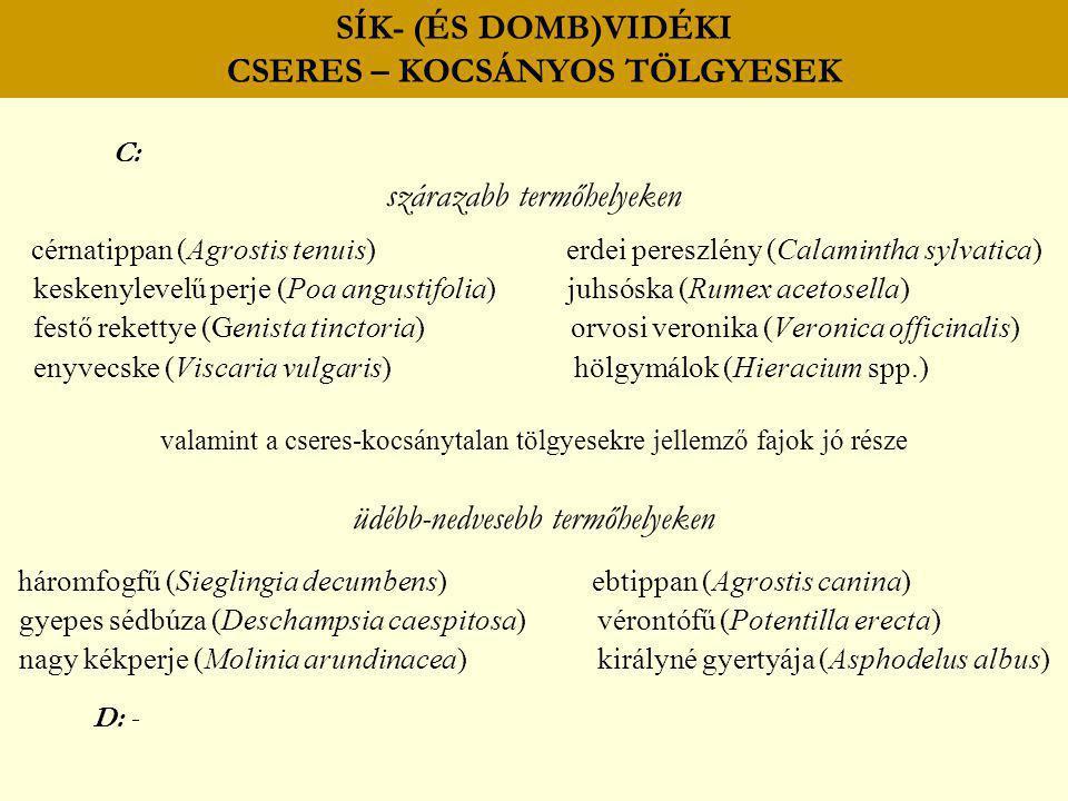 SÍK- (ÉS DOMB)VIDÉKI CSERES – KOCSÁNYOS TÖLGYESEK C: szárazabb termőhelyeken cérnatippan (Agrostis tenuis) erdei pereszlény (Calamintha sylvatica) kes