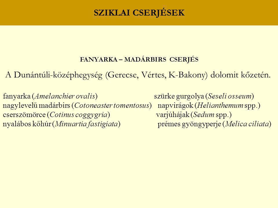SZIKLAI CSERJÉSEK FANYARKA – MADÁRBIRS CSERJÉS A Dunántúli-középhegység (Gerecse, Vértes, K-Bakony) dolomit kőzetén. fanyarka (Amelanchier ovalis) szü