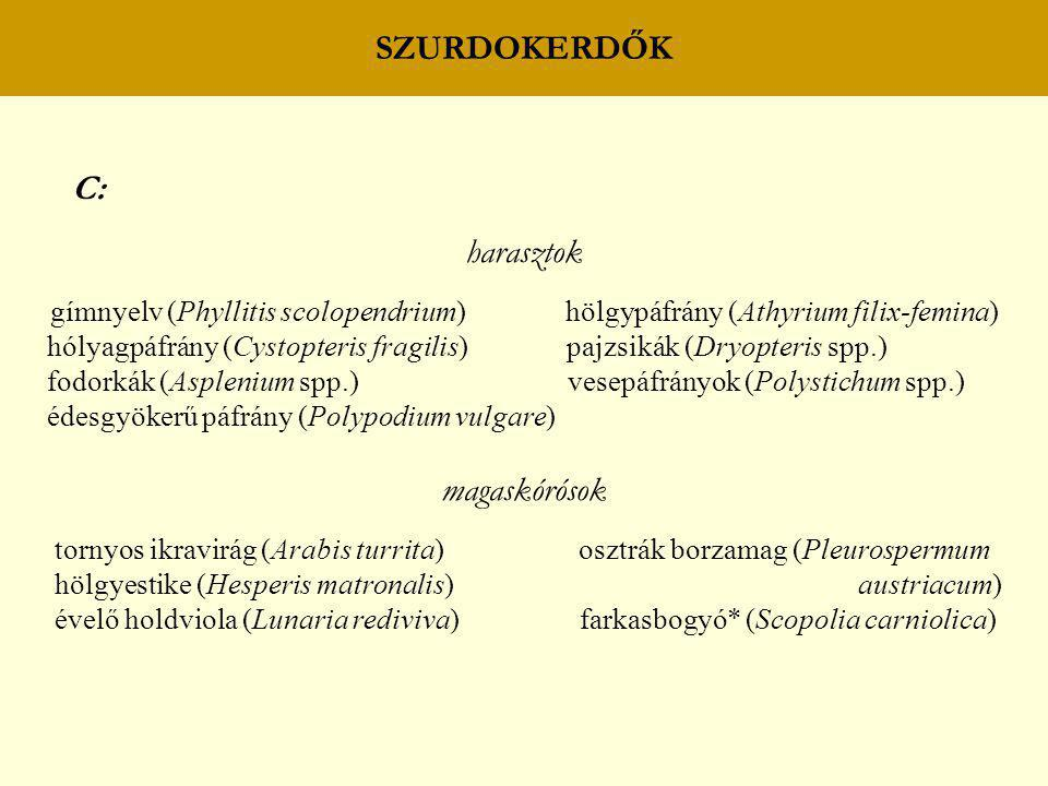 SZURDOKERDŐK C: harasztok gímnyelv (Phyllitis scolopendrium) hölgypáfrány (Athyrium filix-femina) hólyagpáfrány (Cystopteris fragilis) pajzsikák (Dryo