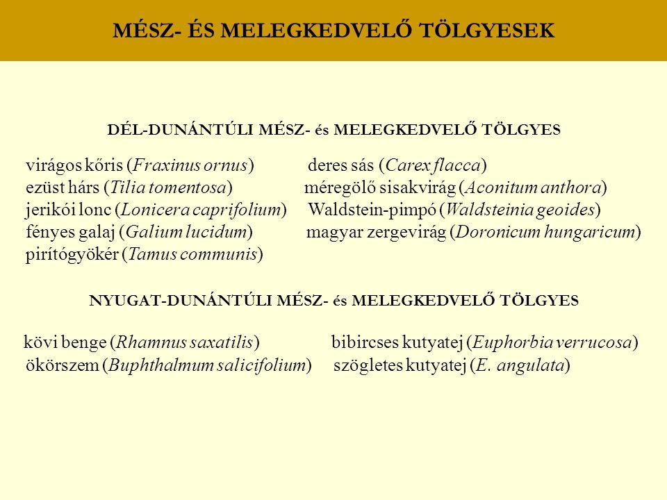 MÉSZ- ÉS MELEGKEDVELŐ TÖLGYESEK DÉL-DUNÁNTÚLI MÉSZ- és MELEGKEDVELŐ TÖLGYES virágos kőris (Fraxinus ornus) deres sás (Carex flacca) ezüst hárs (Tilia tomentosa) méregölő sisakvirág (Aconitum anthora) jerikói lonc (Lonicera caprifolium) Waldstein-pimpó (Waldsteinia geoides) fényes galaj (Galium lucidum) magyar zergevirág (Doronicum hungaricum) pirítógyökér (Tamus communis) NYUGAT-DUNÁNTÚLI MÉSZ- és MELEGKEDVELŐ TÖLGYES kövi benge (Rhamnus saxatilis) bibircses kutyatej (Euphorbia verrucosa) ökörszem (Buphthalmum salicifolium) szögletes kutyatej (E.