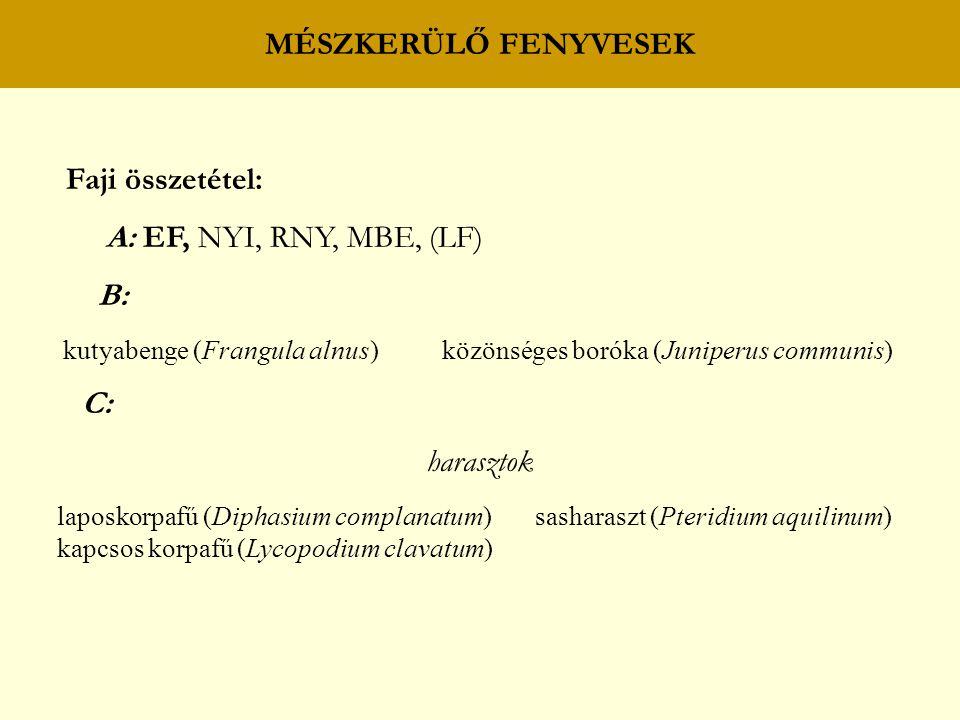 BOKORERDŐK Ökológiai változatok: BOKORERDŐ MÉSZKÖVÖN és BAZALTON sajmeggy (Cerasus mahaleb) macskahere (Phlomis tuberosa) fekete madárbirs (Cotoneaster niger) magyar bogáncs (Carduus collinus) pannon madárbirs (C.