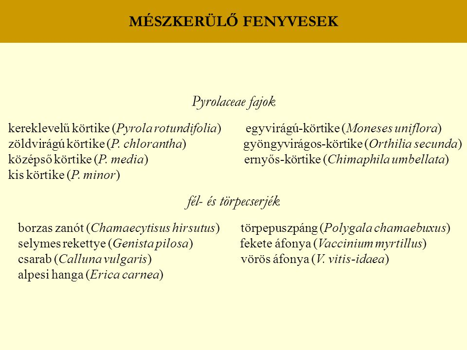 MÉSZKERÜLŐ FENYVESEK füvek – perjeszittyók erdei sédbúza (Deschampsia flexuosa) fehér perjeszittyó (Luzula luzuloides) juhcsenkesz (Festuca ovina) egyéb fajok réti csormolya (Melampyrum pratense) avarvirág (Goodyera repens) macskatalp (Antennaria dioica) fenyőspárga (Monotropa hypopitis) hölgymálok (Hieracium spp.)