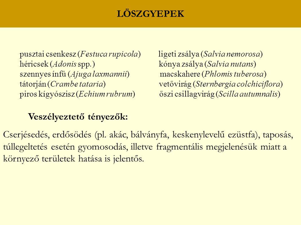 LÖSZGYEPEK pusztai csenkesz (Festuca rupicola) ligeti zsálya (Salvia nemorosa) héricsek (Adonis spp.) kónya zsálya (Salvia nutans) szennyes ínfű (Ajug