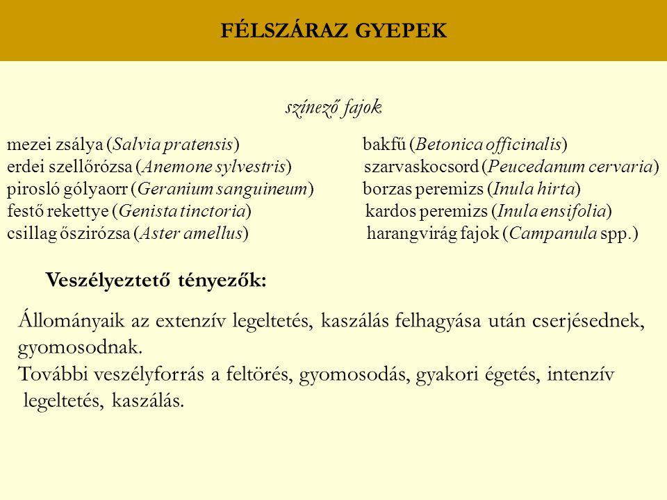 FÉLSZÁRAZ GYEPEK színező fajok mezei zsálya (Salvia pratensis) bakfű (Betonica officinalis) erdei szellőrózsa (Anemone sylvestris) szarvaskocsord (Peu