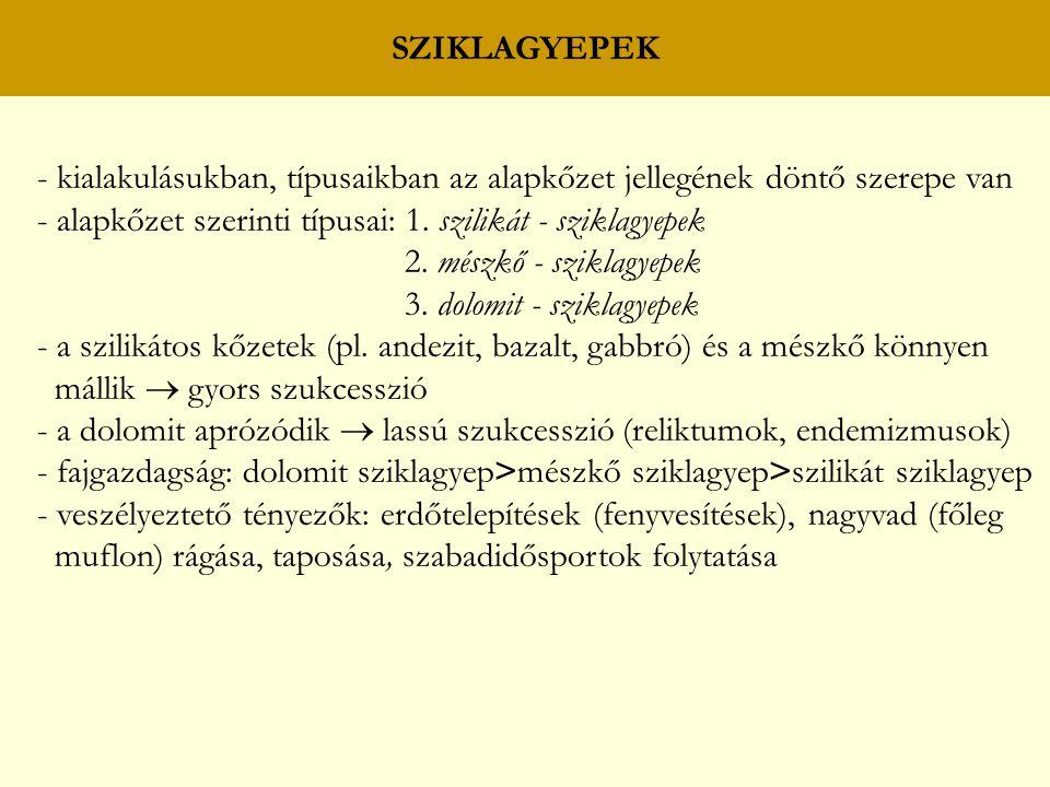 SZIKLAGYEPEK - kialakulásukban, típusaikban az alapkőzet jellegének döntő szerepe van - alapkőzet szerinti típusai: 1. szilikát - sziklagyepek 2. mész