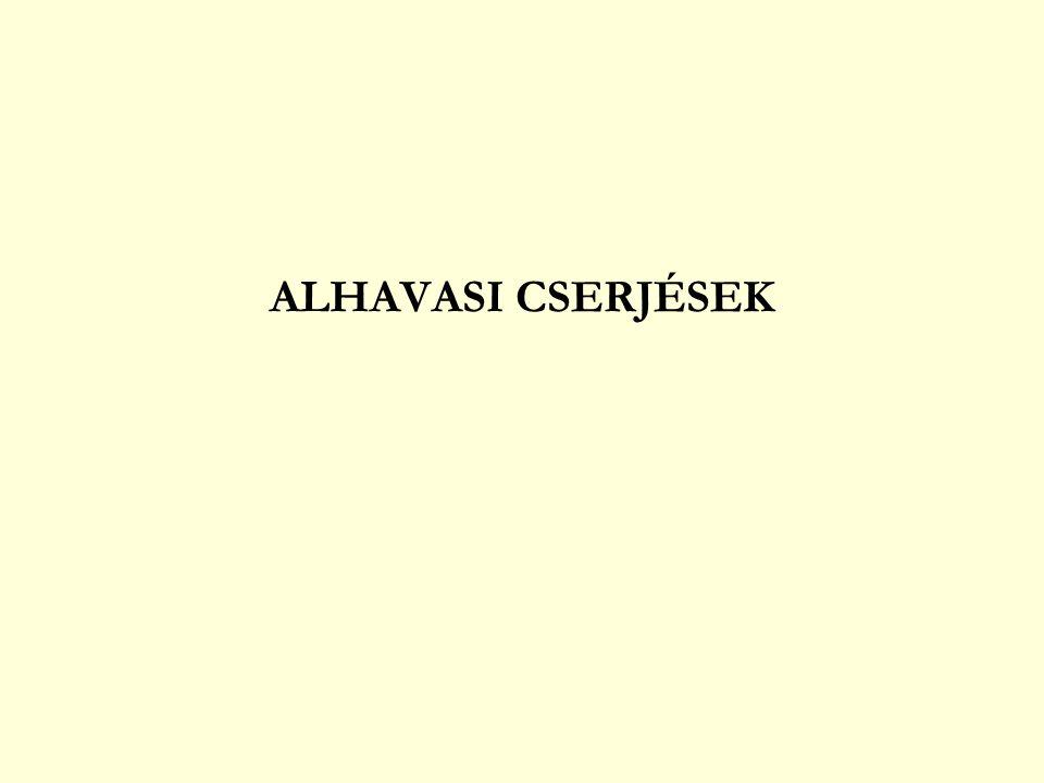 ALHAVASI CSERJÉSEK