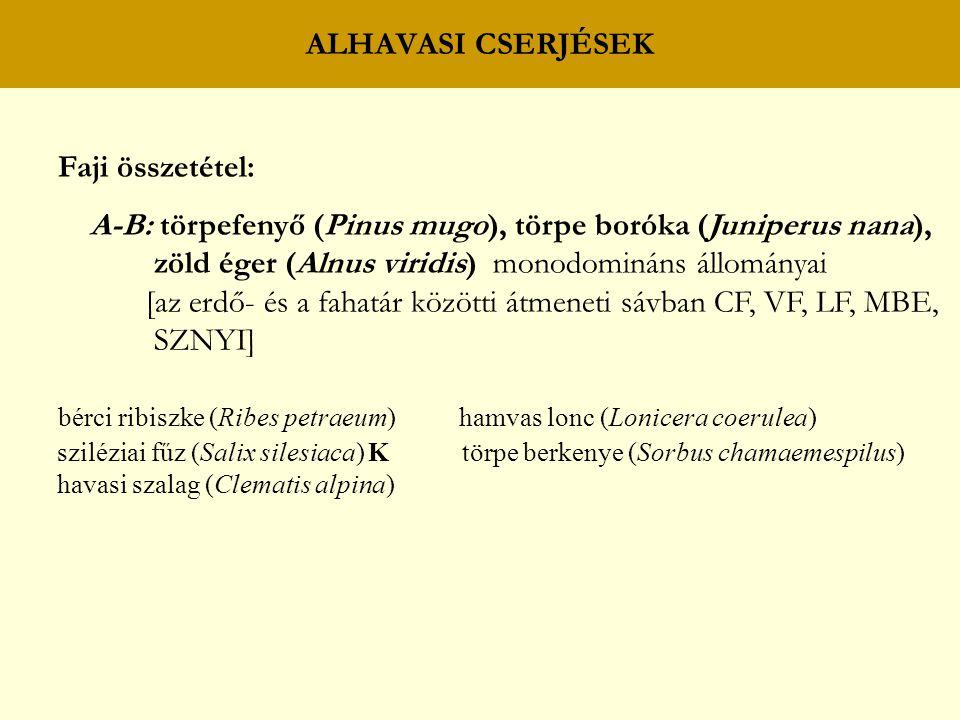 ALHAVASI CSERJÉSEK Faji összetétel: A-B: törpefenyő (Pinus mugo), törpe boróka (Juniperus nana), zöld éger (Alnus viridis) monodomináns állományai [az