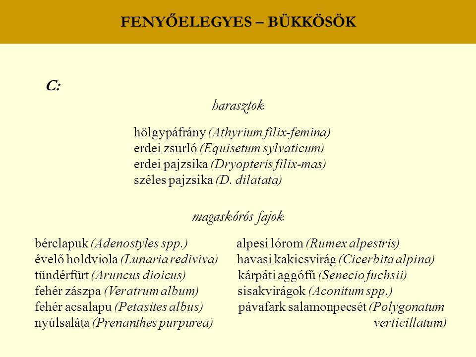 FENYŐELEGYES – BÜKKÖSÖK C: harasztok hölgypáfrány (Athyrium filix-femina) erdei zsurló (Equisetum sylvaticum) erdei pajzsika (Dryopteris filix-mas) sz