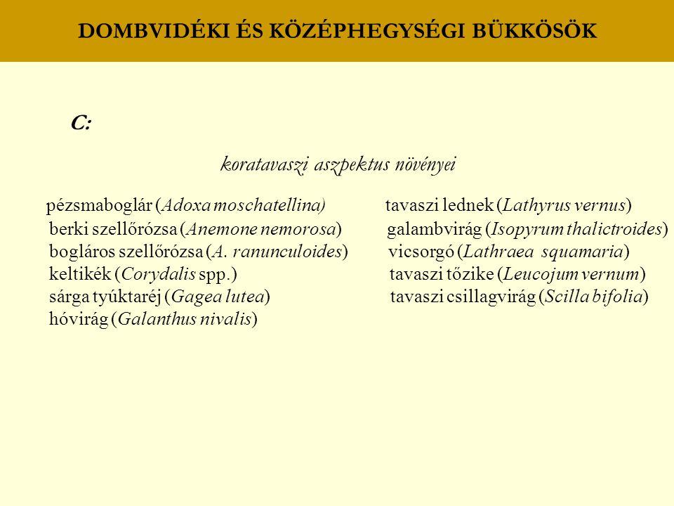 DOMBVIDÉKI ÉS KÖZÉPHEGYSÉGI BÜKKÖSÖK C: koratavaszi aszpektus növényei pézsmaboglár (Adoxa moschatellina) tavaszi lednek (Lathyrus vernus) berki szell